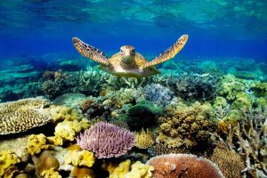 Dreamtime-Hostel-Cairns-Australia-Reef-turtle-greatbarrierreef
